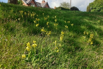 Police station cowslips