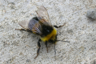 Bee on floor
