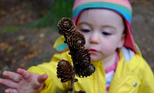 Polly with pine cones