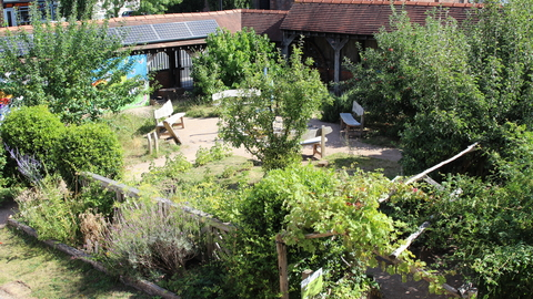 The garden at The Cut