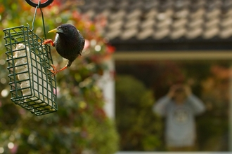 Bird feeder starling