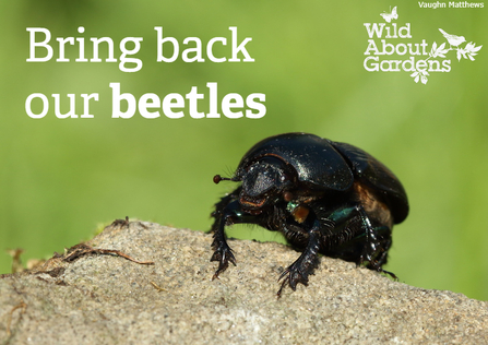 Dung beetles wild about gardens 2021
